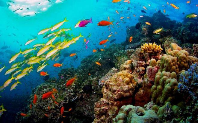 Большой Барьерный риф – всемирное достояние человечества
