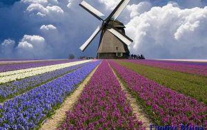 Символы и города Голландии
