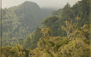 Вечнозеленый Габон в сердце Африки