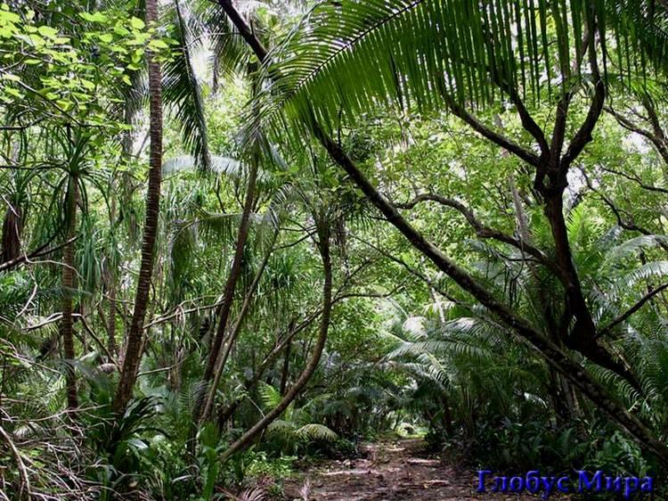 Обезьяний питомник в джунглях