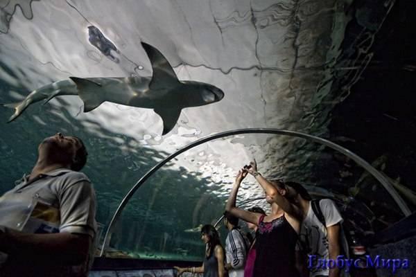 Сиднейский акварум