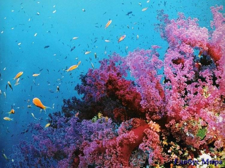 Австралия. Большой Барьерный риф