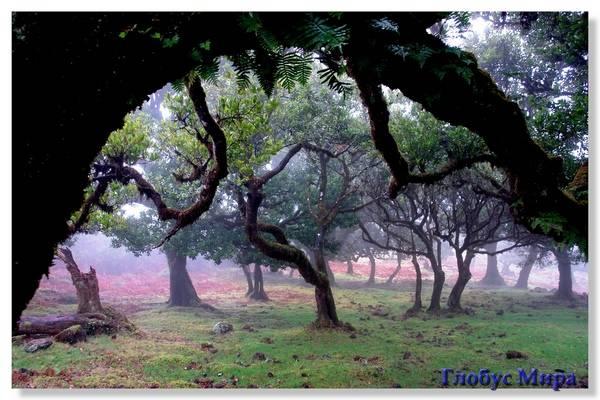 Лавровый лес на Мадейре