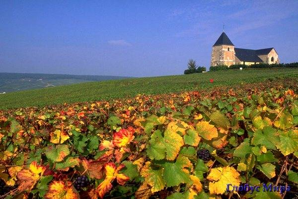Виноградники провинции Шампань
