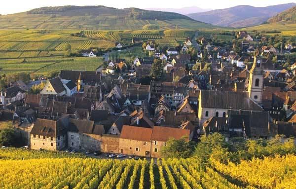 Винодельческие регионы