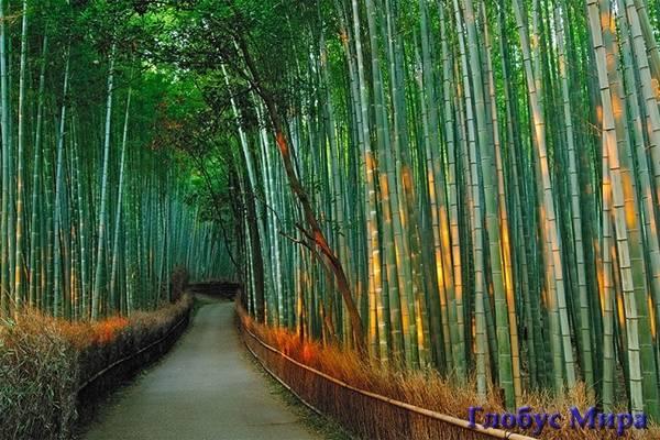 Бамбуковая роща Сагано