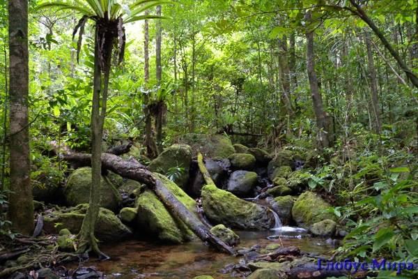 Ливневые леса