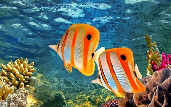 Богатый подводный мир Большого Рифа