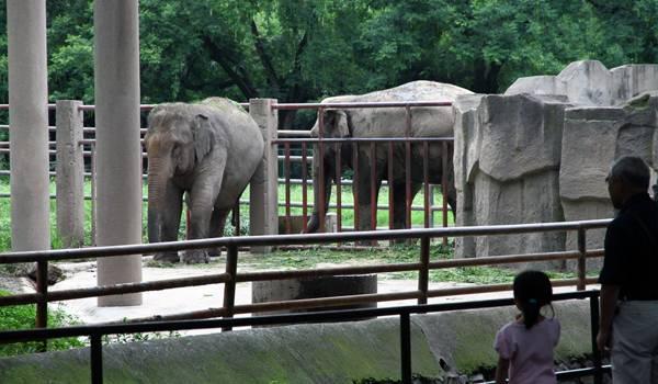 Слоны в Шанхайском зоопарке