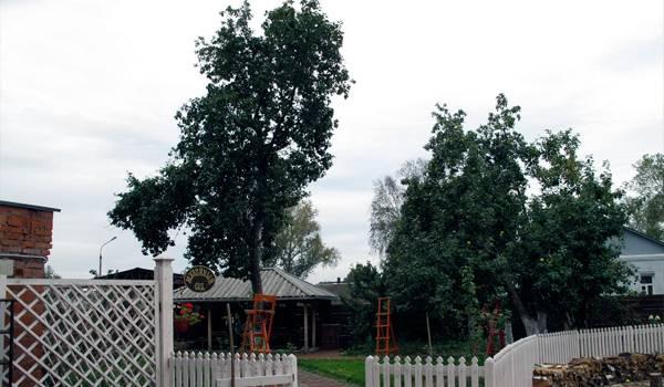 Коломенский сад у музея пастилы