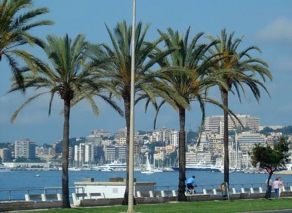 Пальмы – привычная, но привлекательная достопримечательность города
