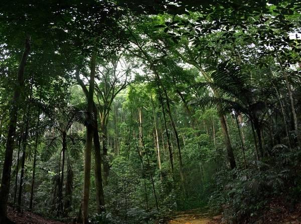 Ливневый лес