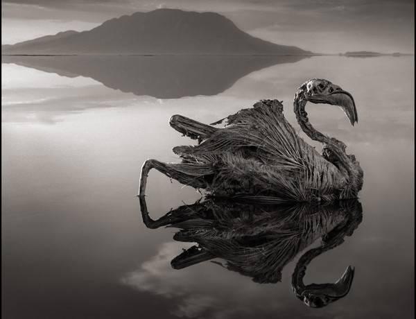 Озеро смерти Натрон