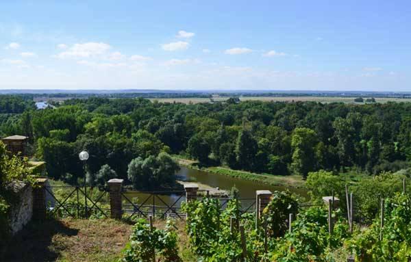 Виноградники Мельника, Чехия