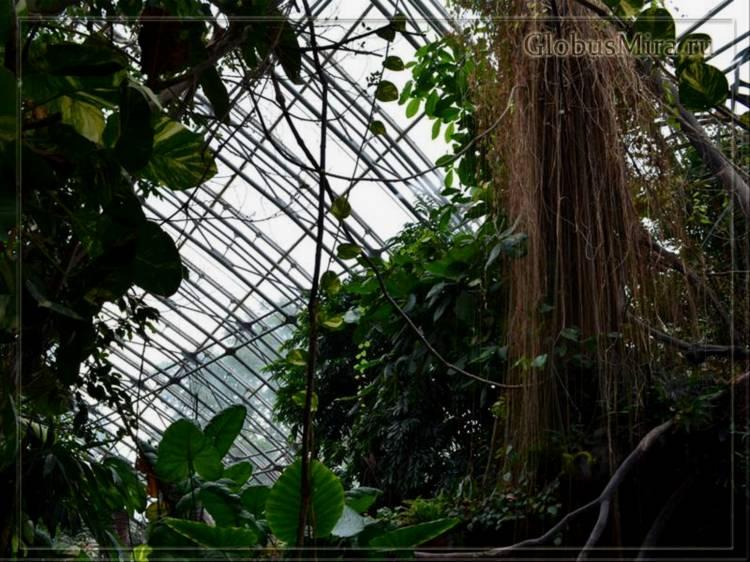 Тропические растения в пражском зоопарке