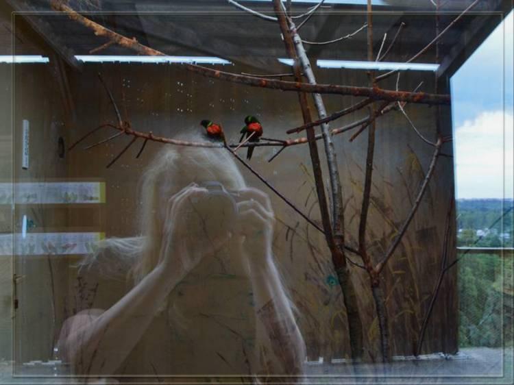 Попугаи в пражском зоопарке