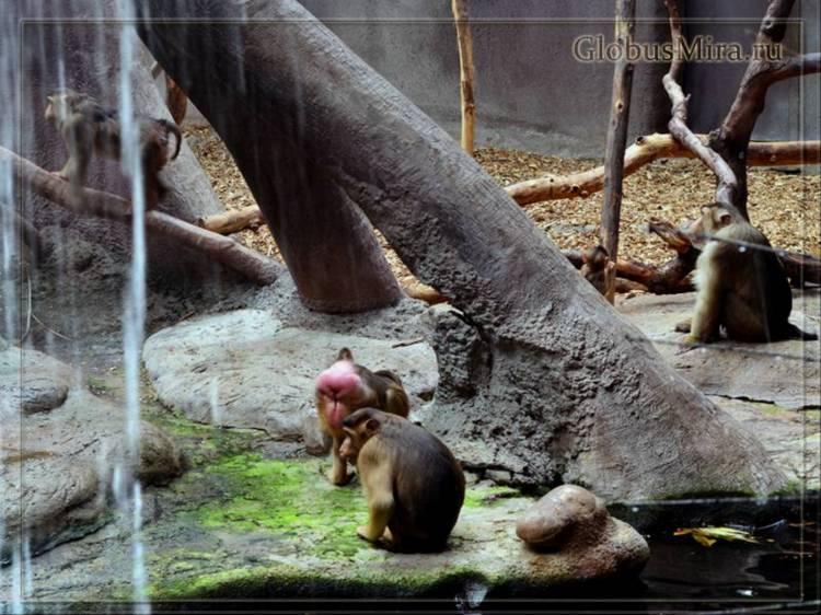 Остров обезьян в пражском зоопарке