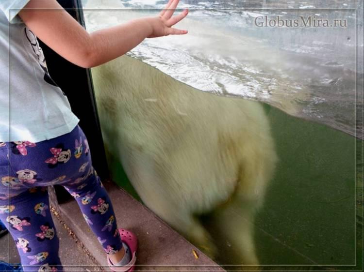 Белый медведь в пражском зоопарке