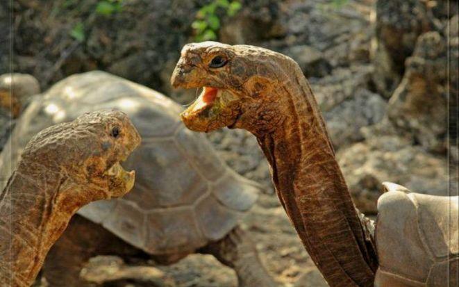 Галапагосы: затерянный мир