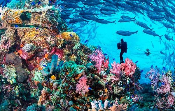 Подводный мир Большого барьерного рифа
