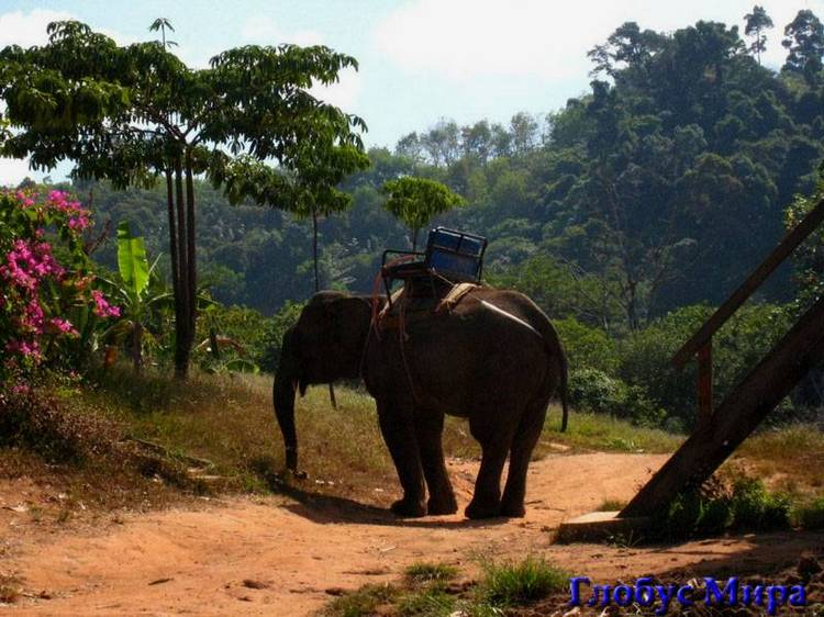 Катание на слонах – экзотическое развлечение