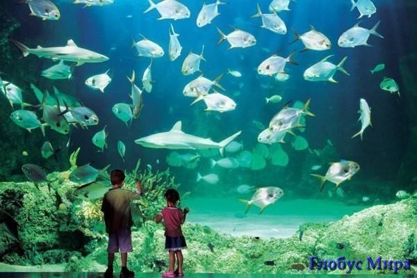 Зона акул. Аквариум Сиднея