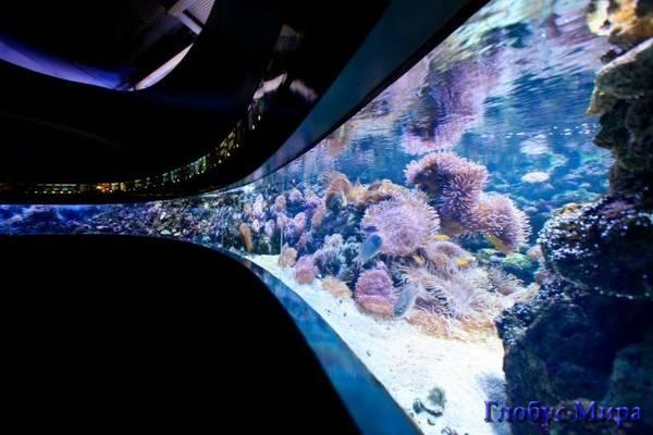 Зона Барьерного Рифа. Аквариум Сиднея