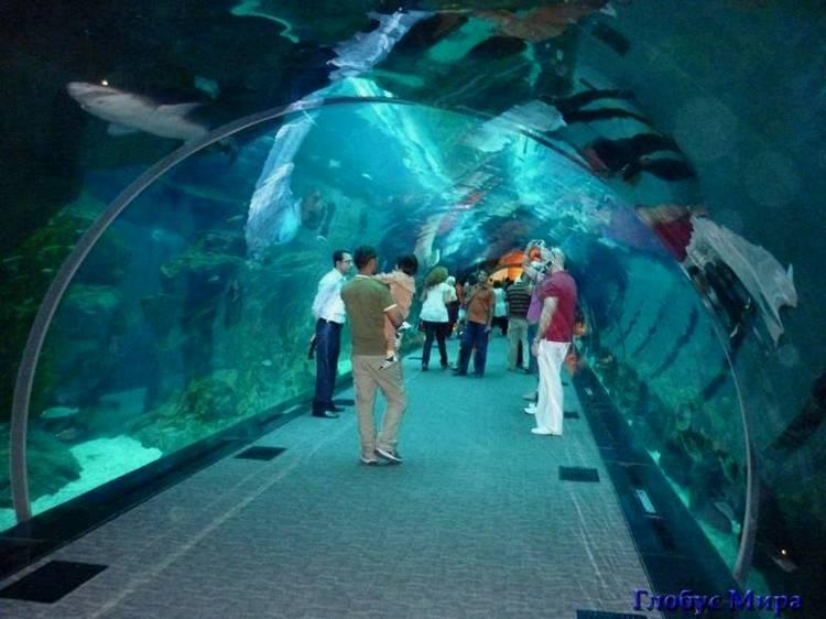 Туннель в аквариуме