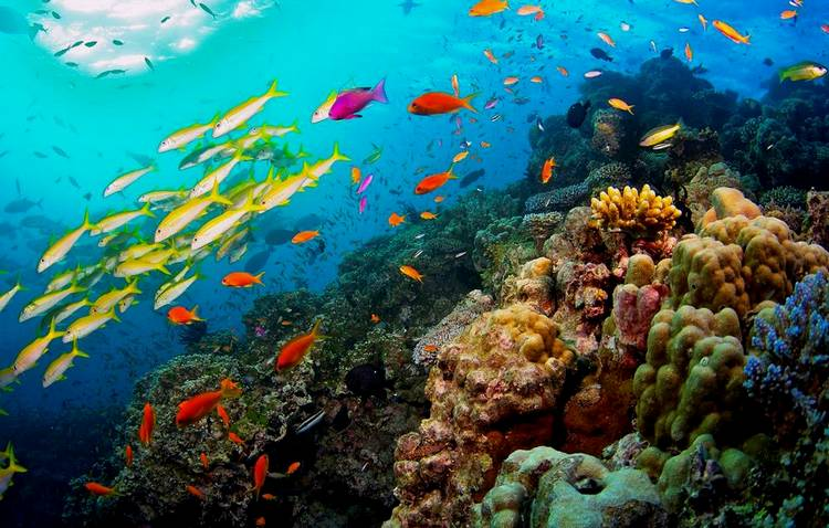 Природа барьерного рифа