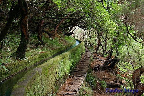 Лавровые леса