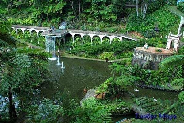 Лавровые леса и парки