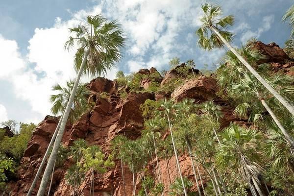 Пальмовая долина