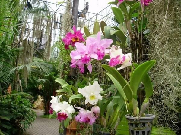 Парк божественных орхидей