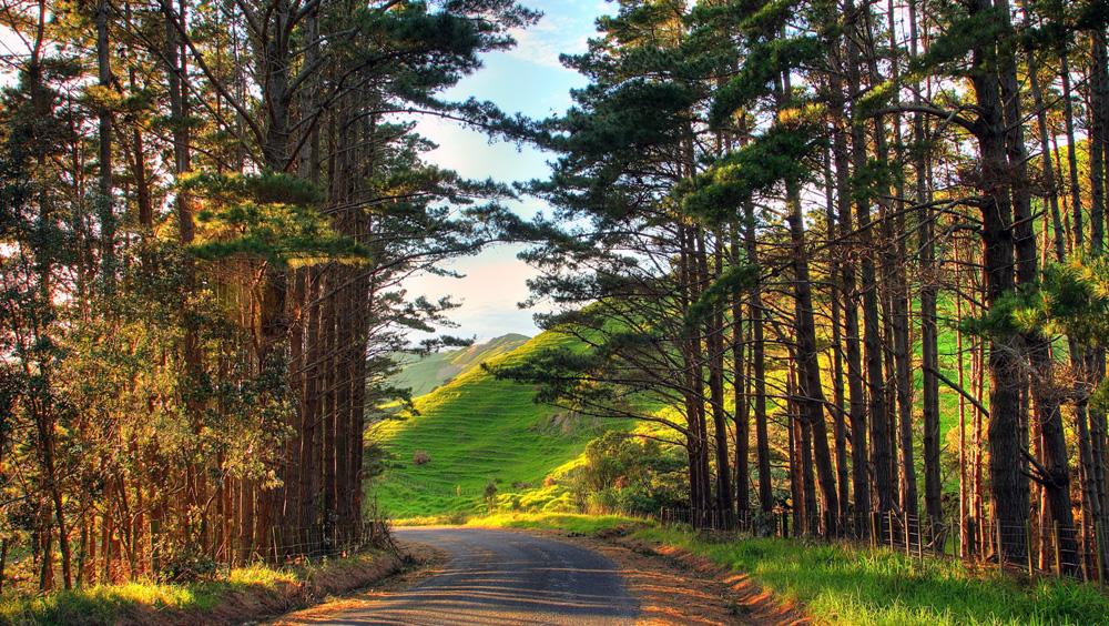 Красивый лес