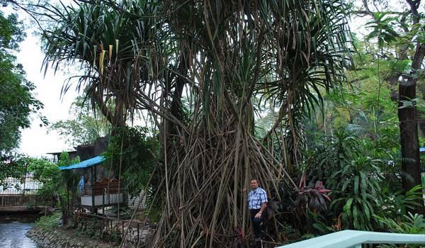 Передвигающееся мангровое дерево в зоопарке Хошимин