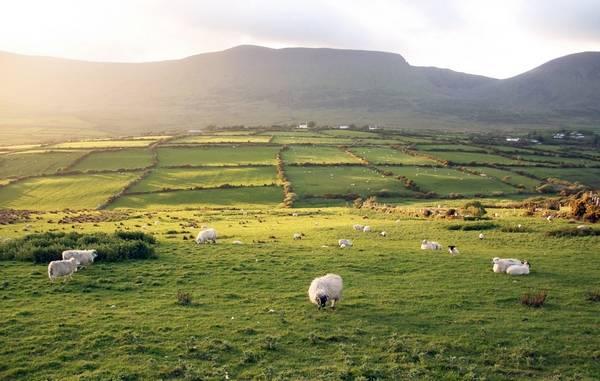 Типичный ирландский пейзаж