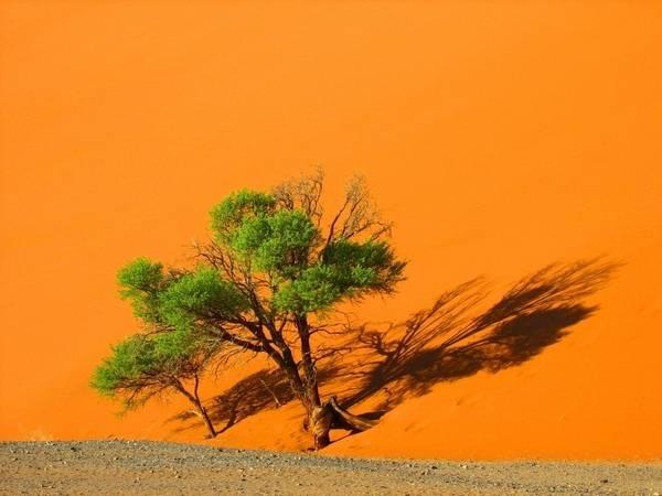 Оранжевый песок Намиб