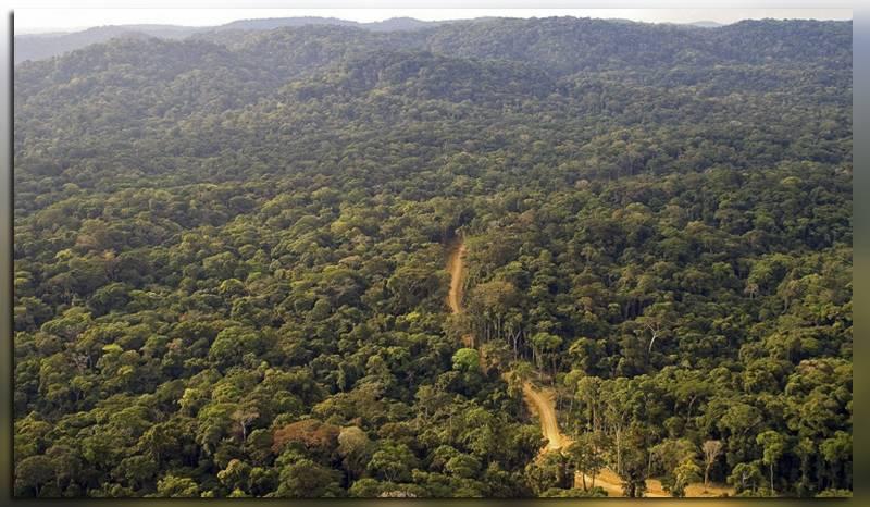 Девственные леса Габона