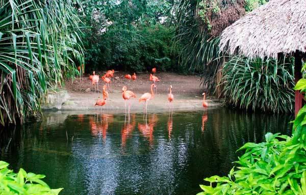 Парк Манати в Пунта-Кана