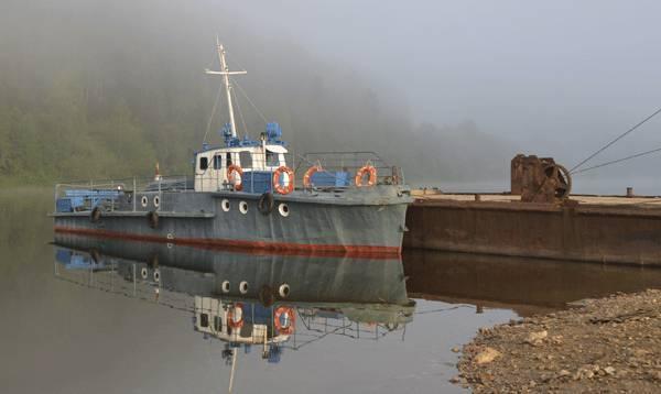Быки на реке Вишера