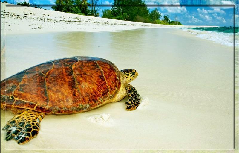 Черепахи на Сейшелах