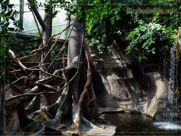 Джунгли Индонезии в пражском зоопарке