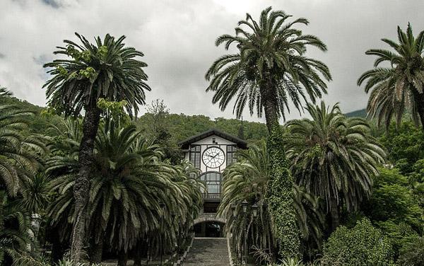 Тропические пальмы в Гаграх