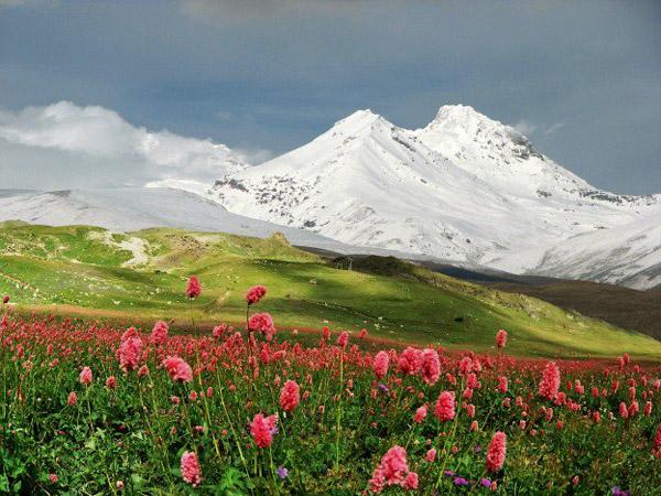Альпийские луга в Приэльбрусье