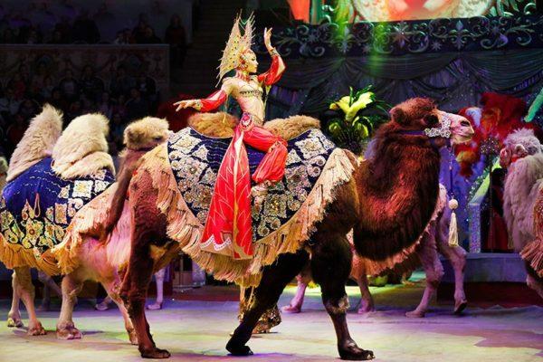 новогодние представления в цирке на Вернадского